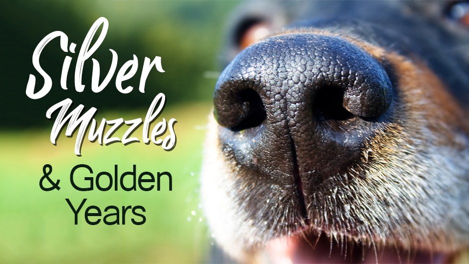 """Silver Muzzles and Golden Years"""