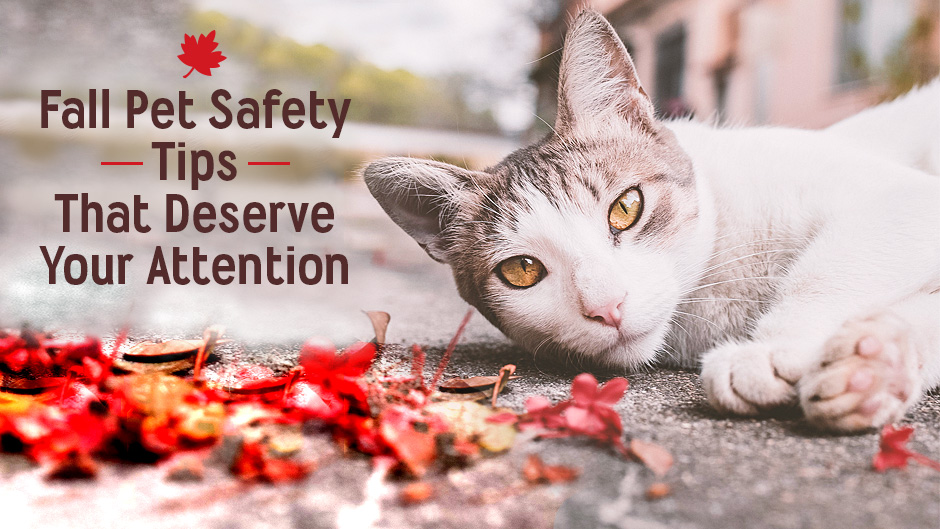 Fall Pet Safety Prevention that Deserves Your Attention