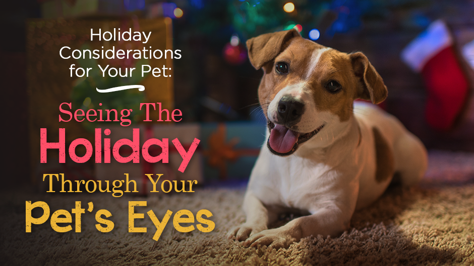 Holiday Considerations for Your Pet: Seeing The Holiday Through Your Pet's Eyes
